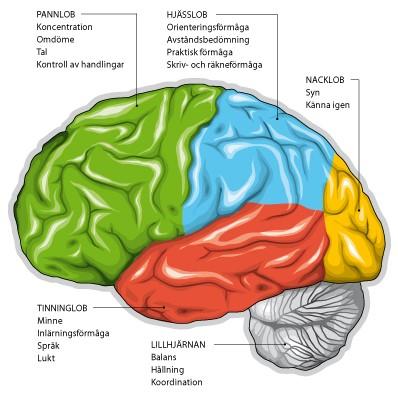 http://www.demenscentrum.se/Global/Fakta%20om%20demens_Bild/hjarnan_sidan_text.jpg